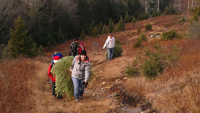 Getting the Tree (2)