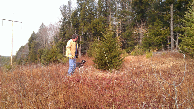 Getting the Tree (4)