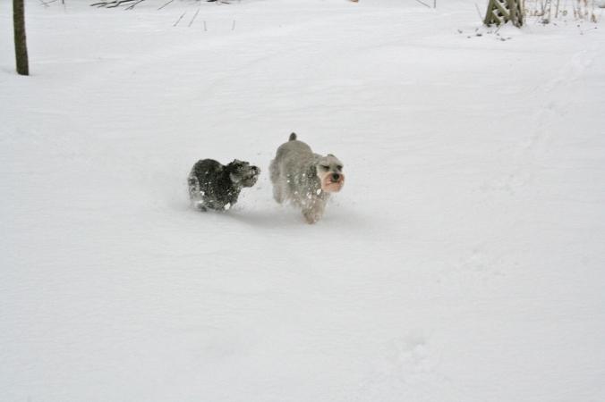080229 Sophie & Buddy in snow (5)