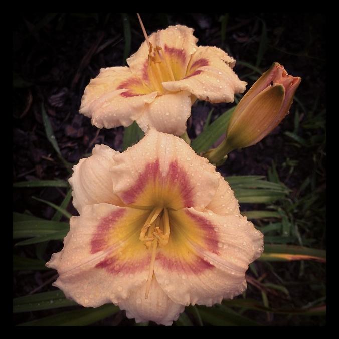 130721 Garden (8)