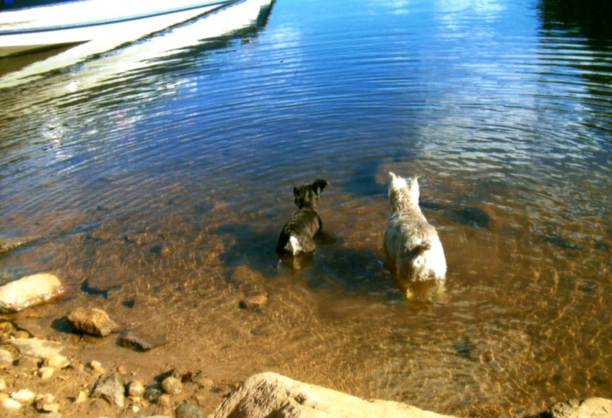 Buddy and Sophie at the lake