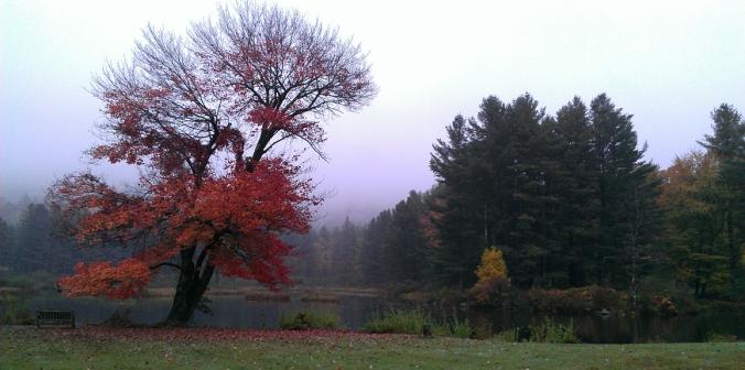 131007 Mill Pond