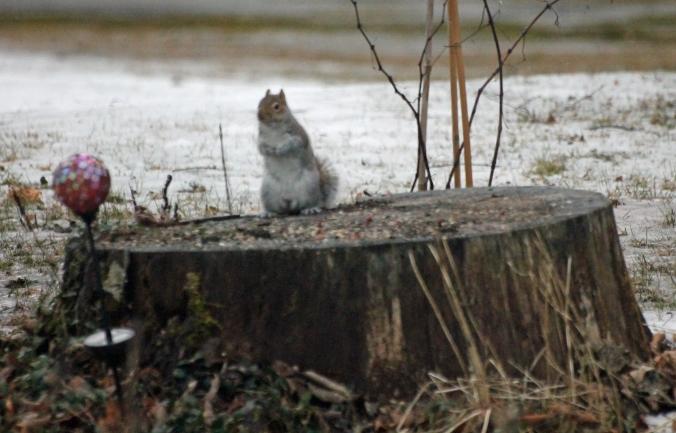 140112 Squirrel (2)