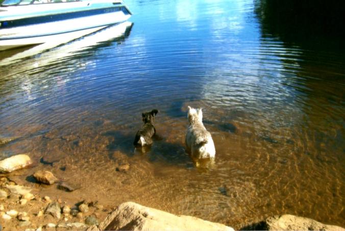 080709 Dogs at lake