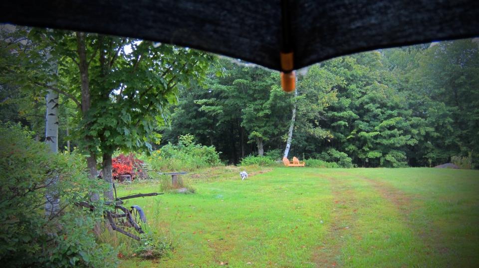 140812 Back Forty Rain