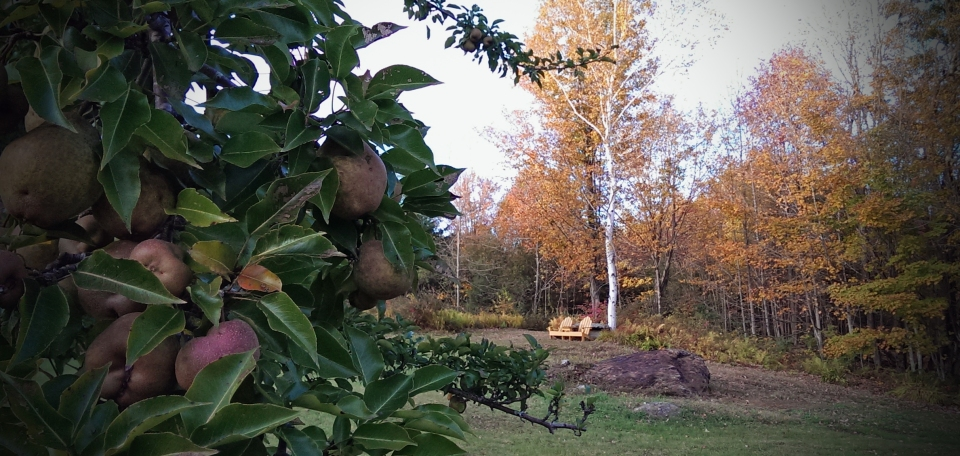 141010 Pear and Adirondack