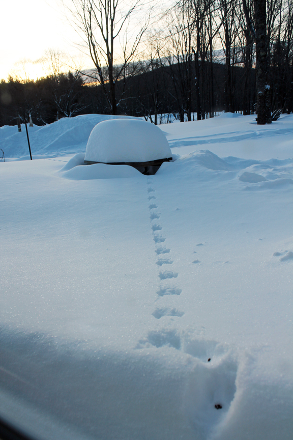 150203 Squirrel Tracks
